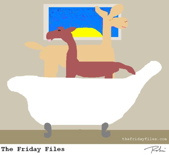 Llamas in a tub!